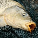 6 podobností marketingu a rybařiny