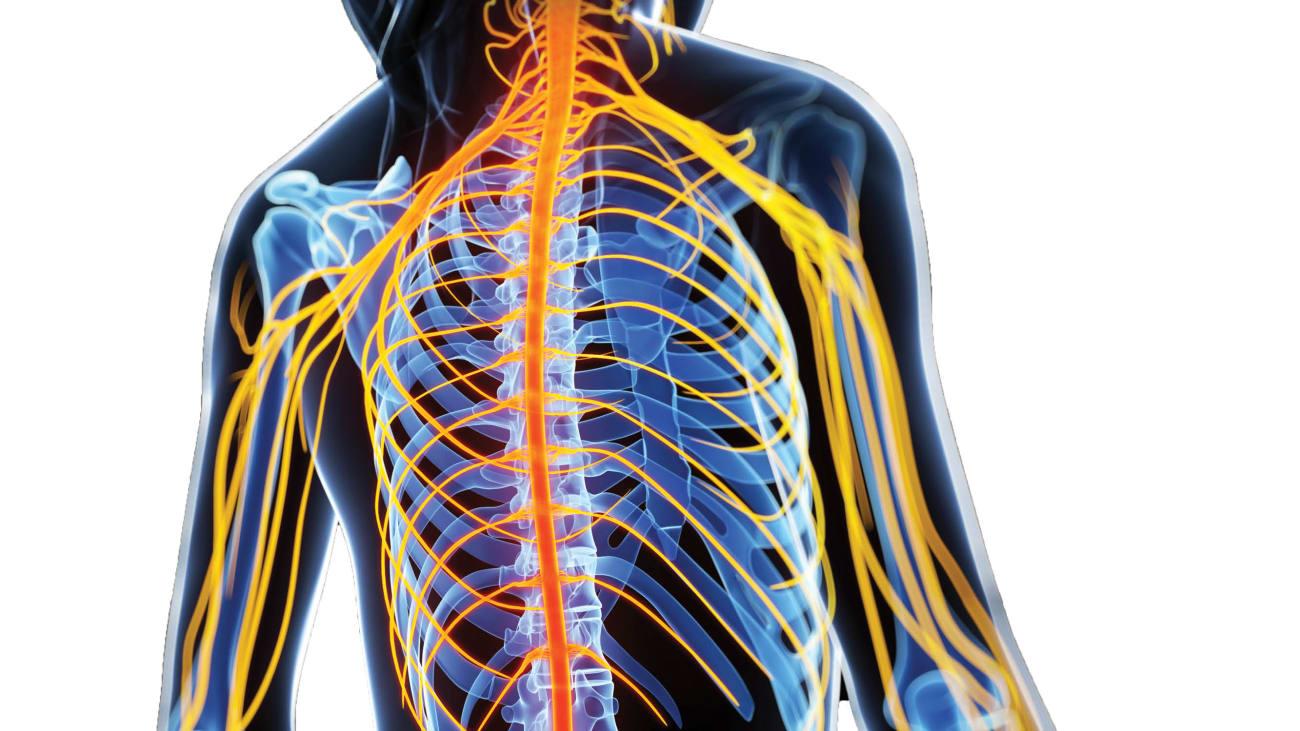 A Deeper Understanding of MS and Vitamin D - Johns Hopkins Medicine