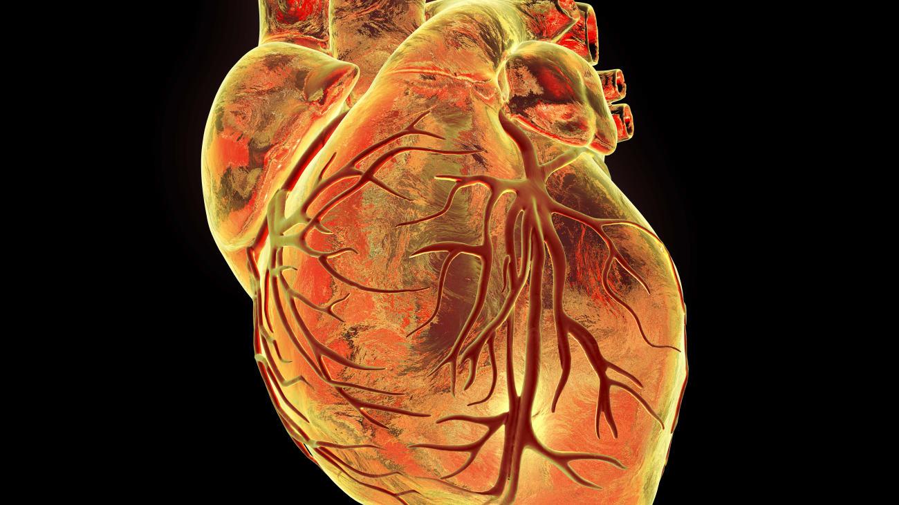 Percutaneous Treatment of Cardiac Valvular Disease: Part 2