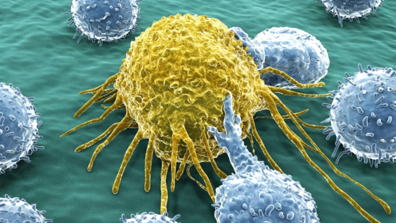 Evolving immunotherapies for solid organ tumors