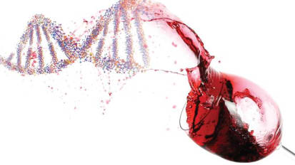 Genetic Clues Link Depression and Alcohol Dependence