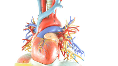 2020 Virtual Cardiovascular Evening Symposium: Structural Heart and EP Updates