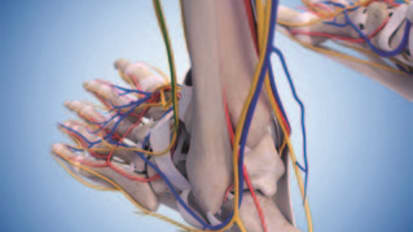 Center for Limb Preservation and Diabetic Foot