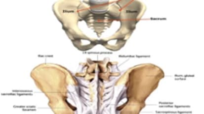 Sacroiliac Joint and Low Back Pain: Radiological Interventions: Hongtao Michael Guo, M.D., Ph.D.