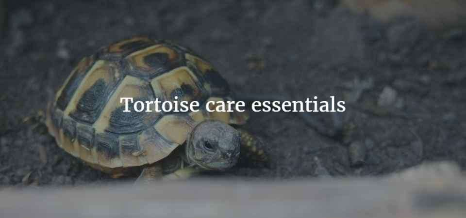 What set up do i need for my tortoise exoticdirect the tortoise table sterilised top soil heat basking lamps dimming thermostat uvb lamps for your tortoise ceramic heat emitter and pulse aloadofball