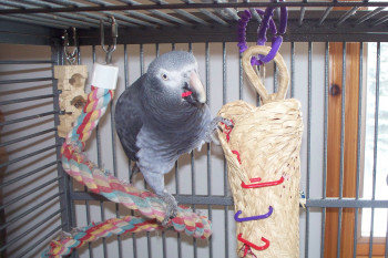 a home made parrot to toy - a treat wrapped in a rafia mat