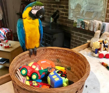 10 Ideas For Homemade Parrot Toys Exoticdirect