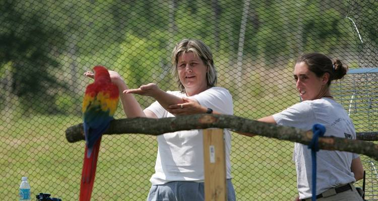 How to train a parrot to step up - ExoticDirect