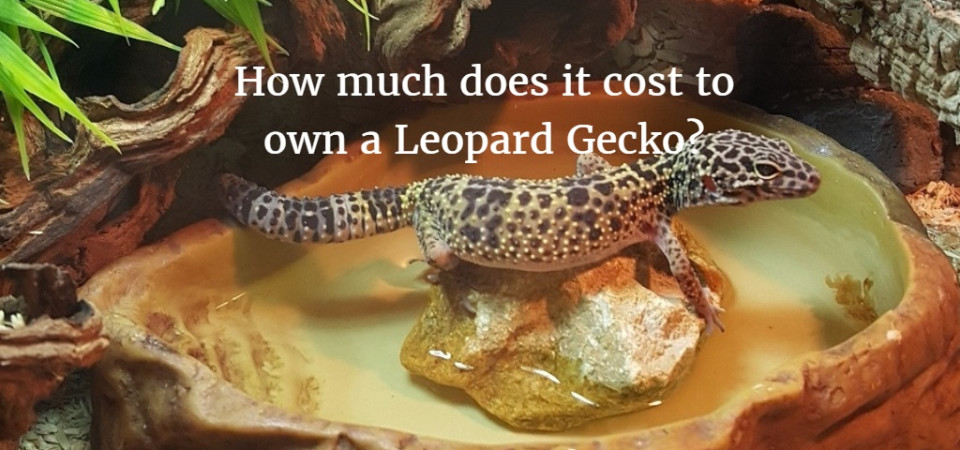 How Much Does It Cost To Own A Leopard Gecko