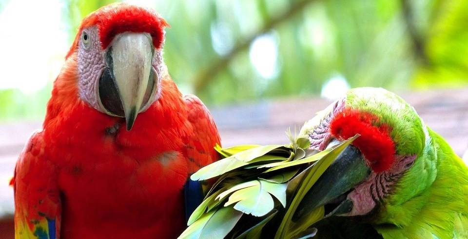 The 5 things you need to know about purchasing a bird