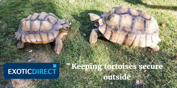 Keeping tortoises outside - ExoticDirect