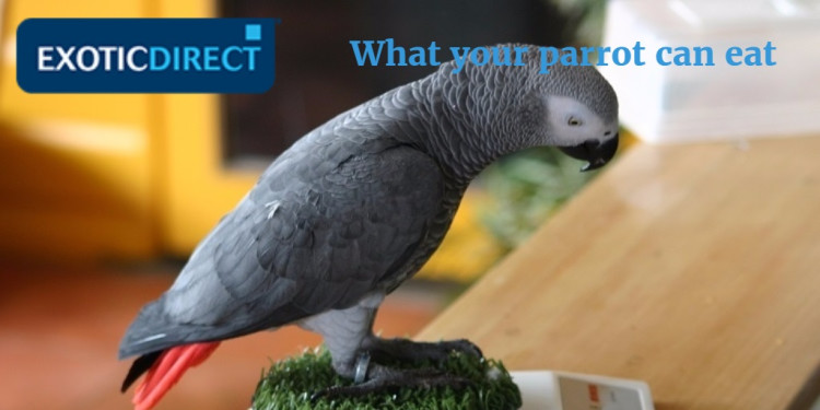 african_grey_playing_on_kitchen_scales