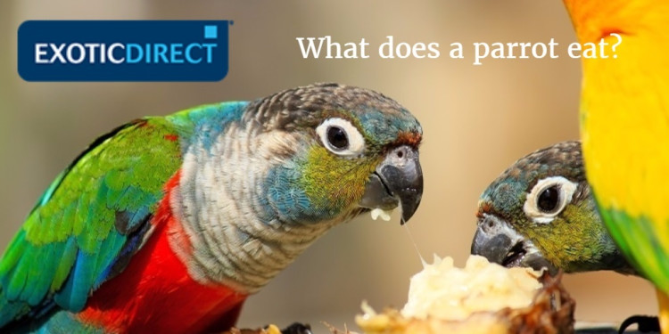 Can Any Bird Eat Parrot Food