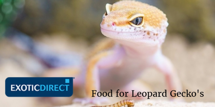 how much is food for a leopard gecko