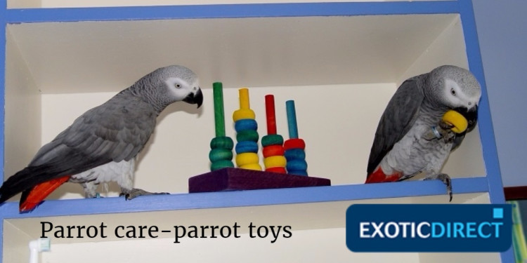 two parrots playing with toys
