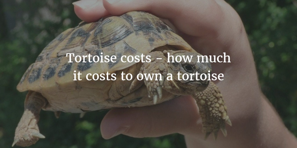 Tortoise costs - how much it costs to own a Tortoise