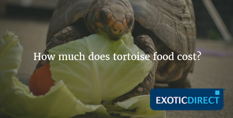 tortoise eating lettuce