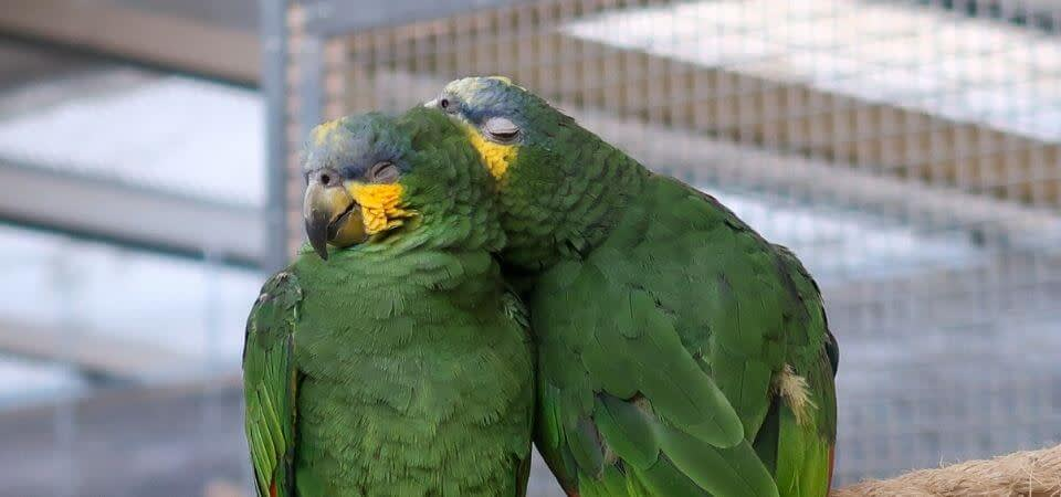 Parrots And Sleeping Exoticdirect