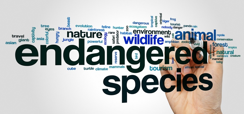 Exotic Pets The Trade In Endangered Species And Cites Regulation