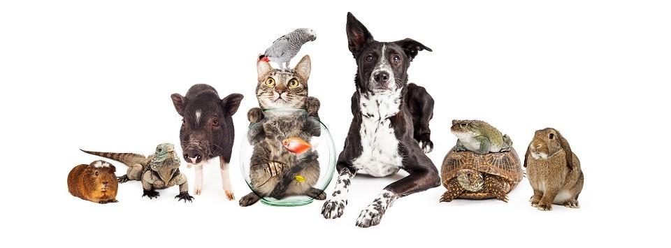 animal friends pet insurance claim form pdf