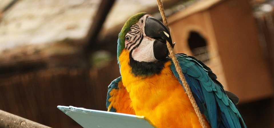Biting and feather plucking in parrots - ExoticDirect