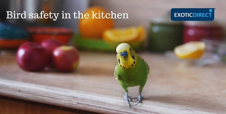 keeping your parrot safe in the kitchen