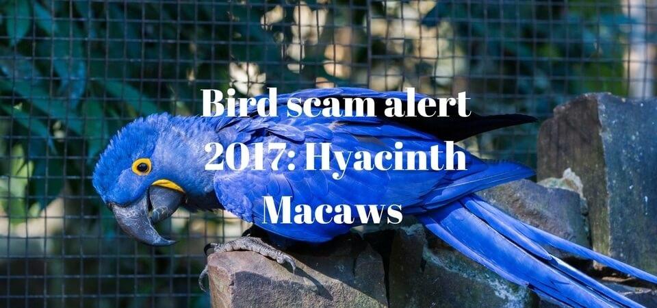 Hyacinth Macaw bird scam 2017 - ExoticDirect