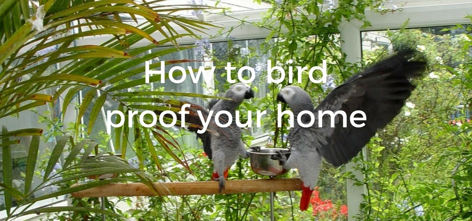 How to bird proof your home - ExoticDirect