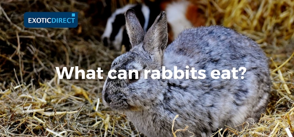 What Can Rabbits Eat Hay Vegetables Fruit And Water