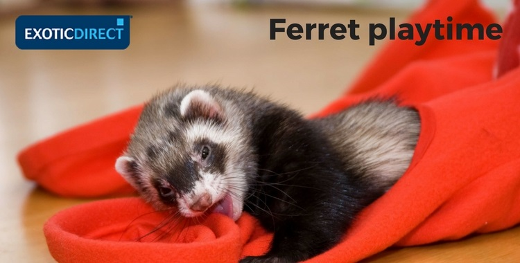 ferret playing in a soft tunnel
