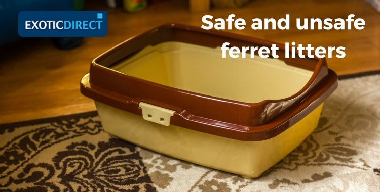 How To Look After Ferrets Cage Setup Cleaning Toxic