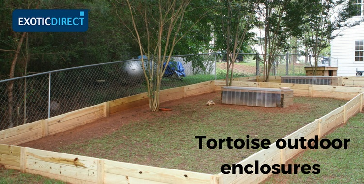 How to build an outdoor tortoise enclosure - ExoticDirect