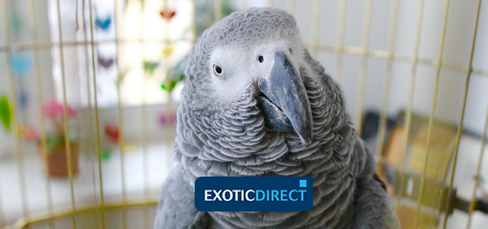 Parrot names, male, female, famous and not-so-famous - ExoticDirect