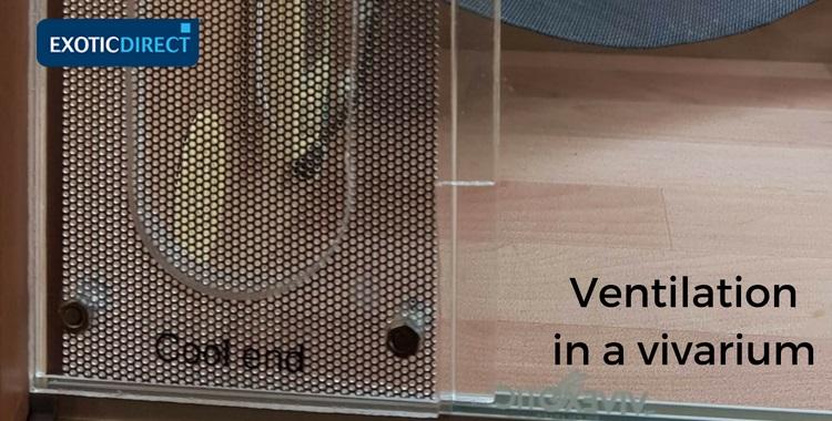 mesh between the vivarium door opening and side
