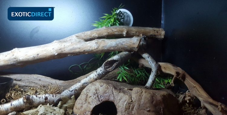 branches and a hide inside a vivarium
