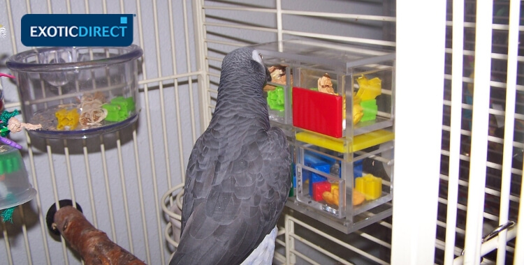 african grey parrot getting toys out of plastic boxes