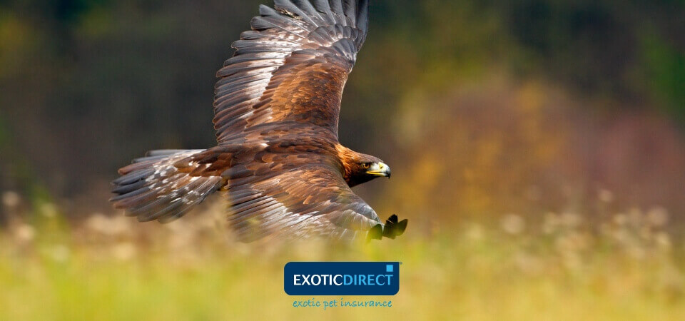 Do you need a licence for a Bird of Prey? - ExoticDirect
