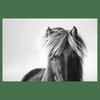 The Gallop Print
