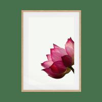 The Lotus Print