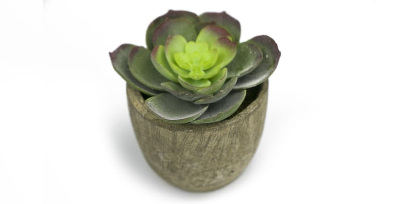 Sweet Succulents Set of 3