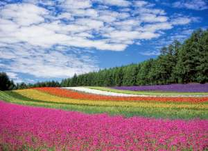 Colorful field of flowers under a beautiful blue sky