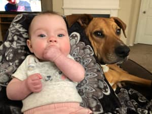 A baby, Kennedy Beck, with one of her family's dogs
