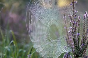 Closeup of spider web in a flower garden