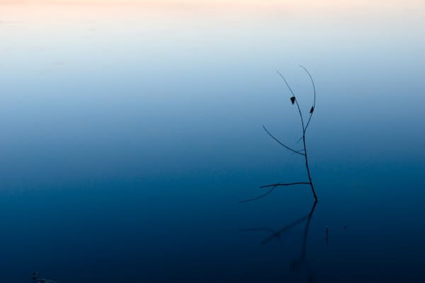 Concept photo of simplicity, showing single twig sticking out of still water