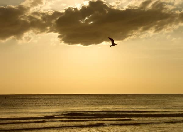 A seagull flying alone over water at sunset