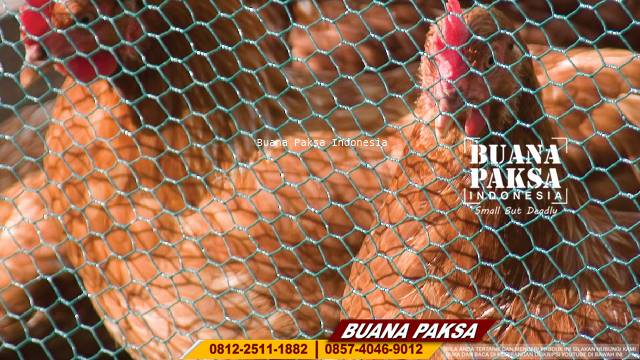 Supplier Weld Mesh  Di Biak
