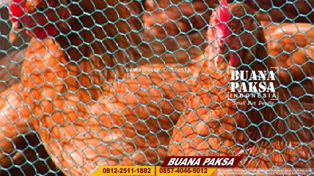 Jual Weld Mesh PVC Hijau Wilayah Pacitan