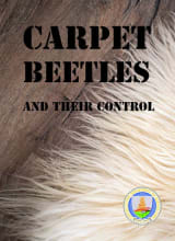 Carpet Beetles And Their Control