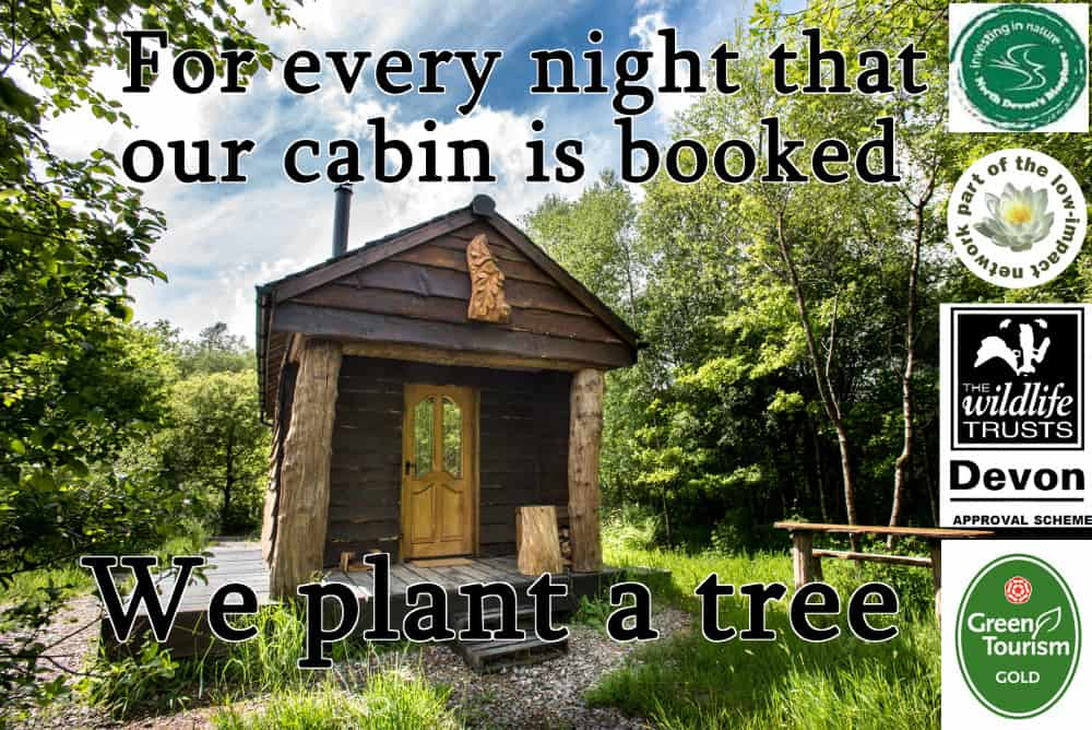 Romantic cabin in the woods with environmental awards