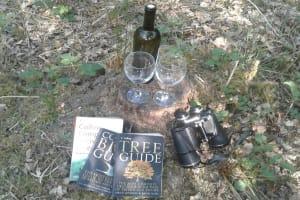 Woodland Wildlife Identifying Books